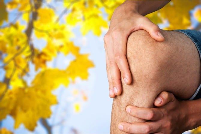 Human Knee.